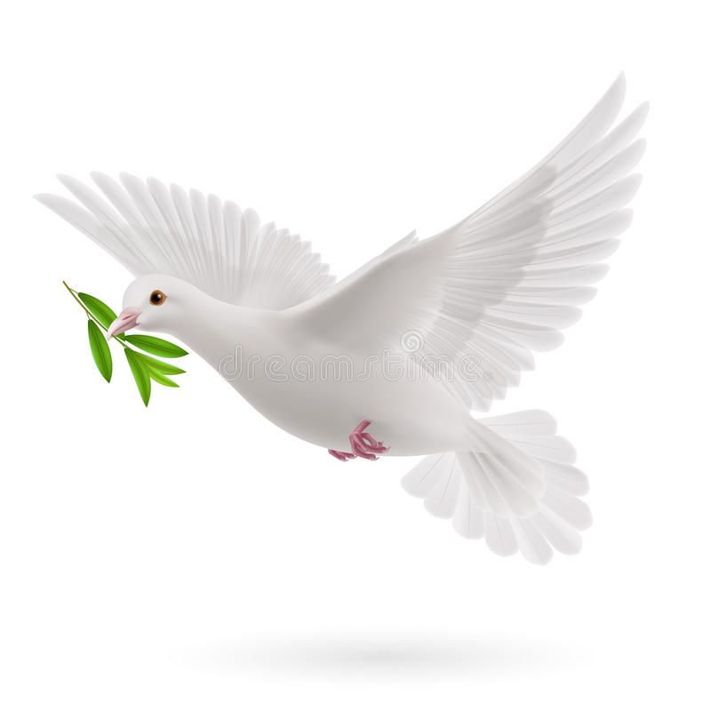 Fly Dove Dove Of Peace Flying With A Green Twig Olive After Flood On White Back Affiliate Peace Flying Dove Dove Images Dove Pictures Dove Sketches