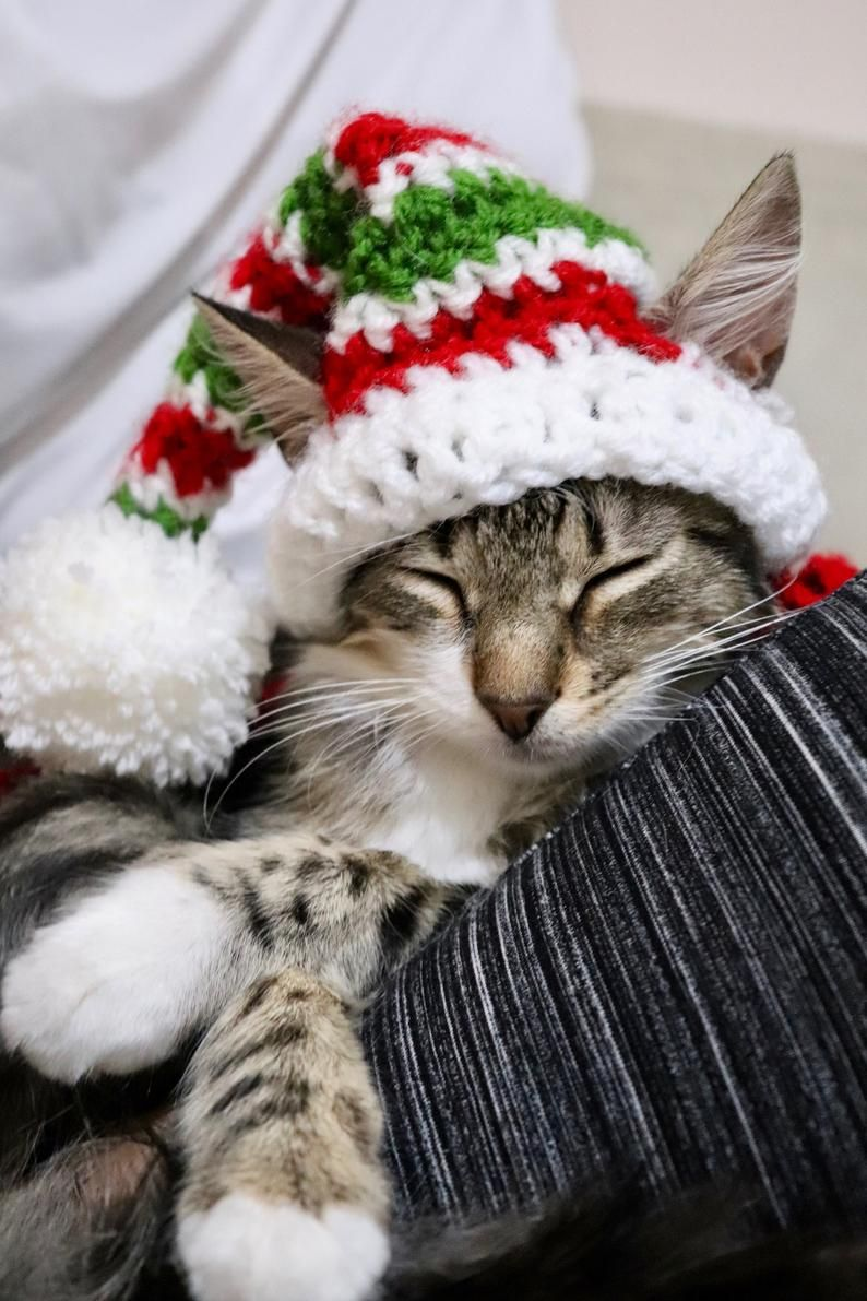 Crochet Pattern Christmas Elf Hat for Cats digital PDF