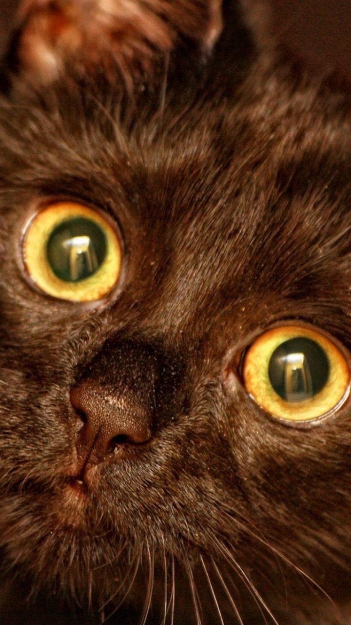 X wallpaper kitten face eyes black gatinhos pinterest