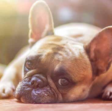 Photo of Alérgico a Fido y Fluffy: qué hacer si es alérgico a su mascota – Issuu
