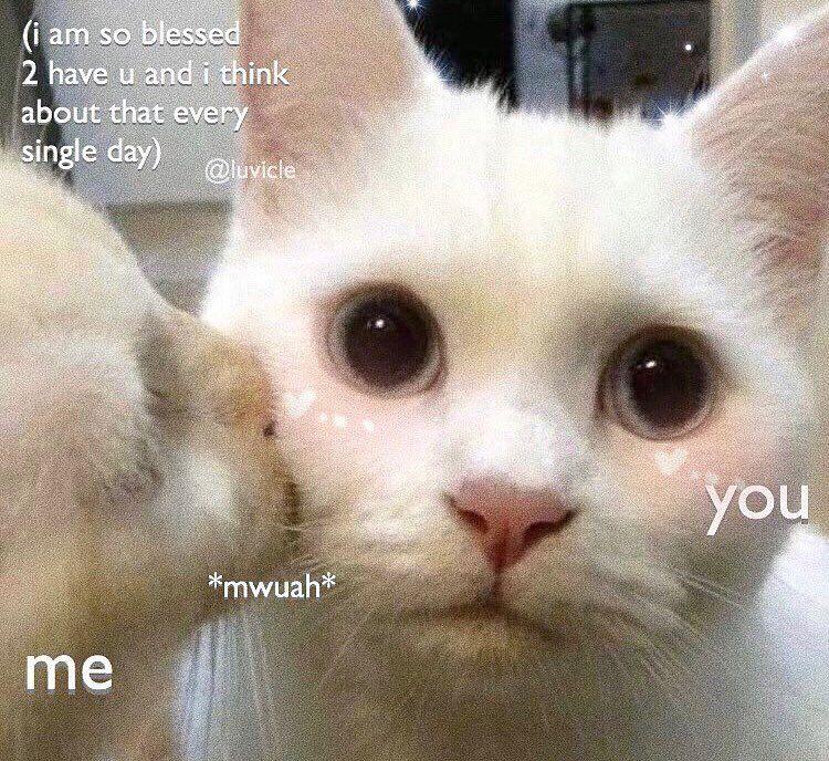 Blessed I Tell U Luvicle Cute Cat Memes Love You Meme Cute Memes
