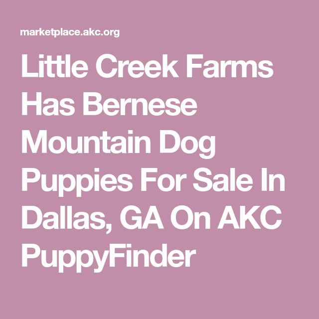 Little Creek Farms Has Bernese Mountain Dog Puppies For Sale