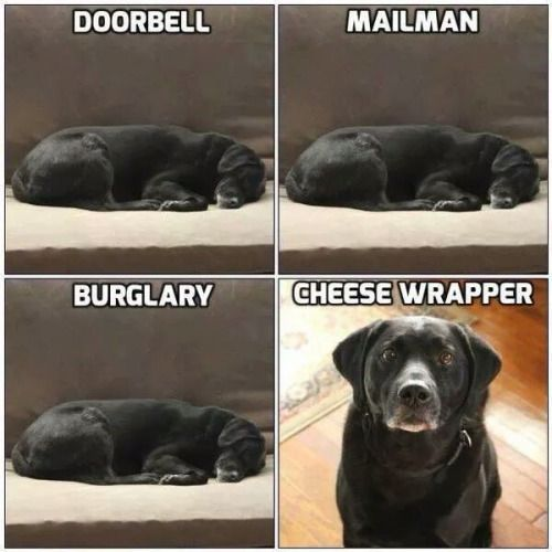 Reminds me of my dog via /r/funny...