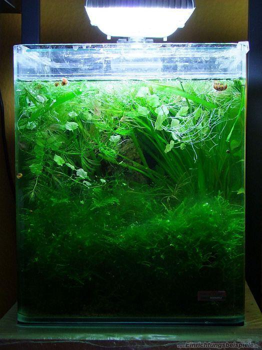 Aquarium von Denise83: Kleiner Dschungel - 20l Bettabecken (fast ...
