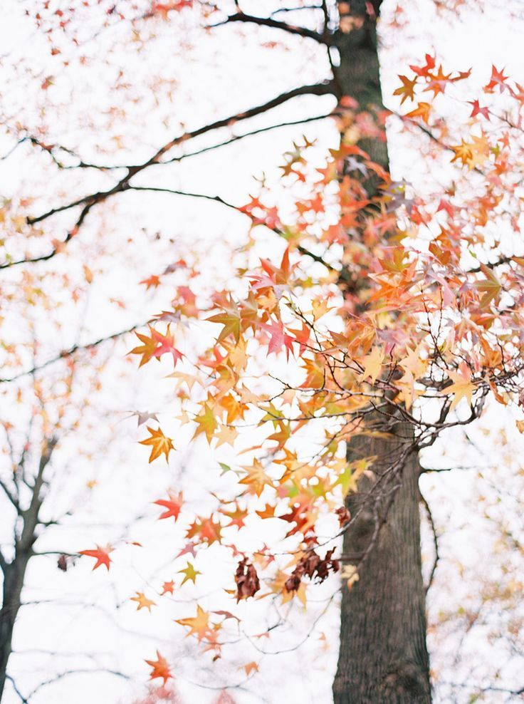 Autumn Leaves Image By R E B E C C A On F A L L