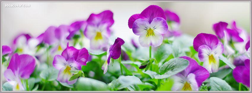 Purple Flowers Facebook Covers FB Timeline