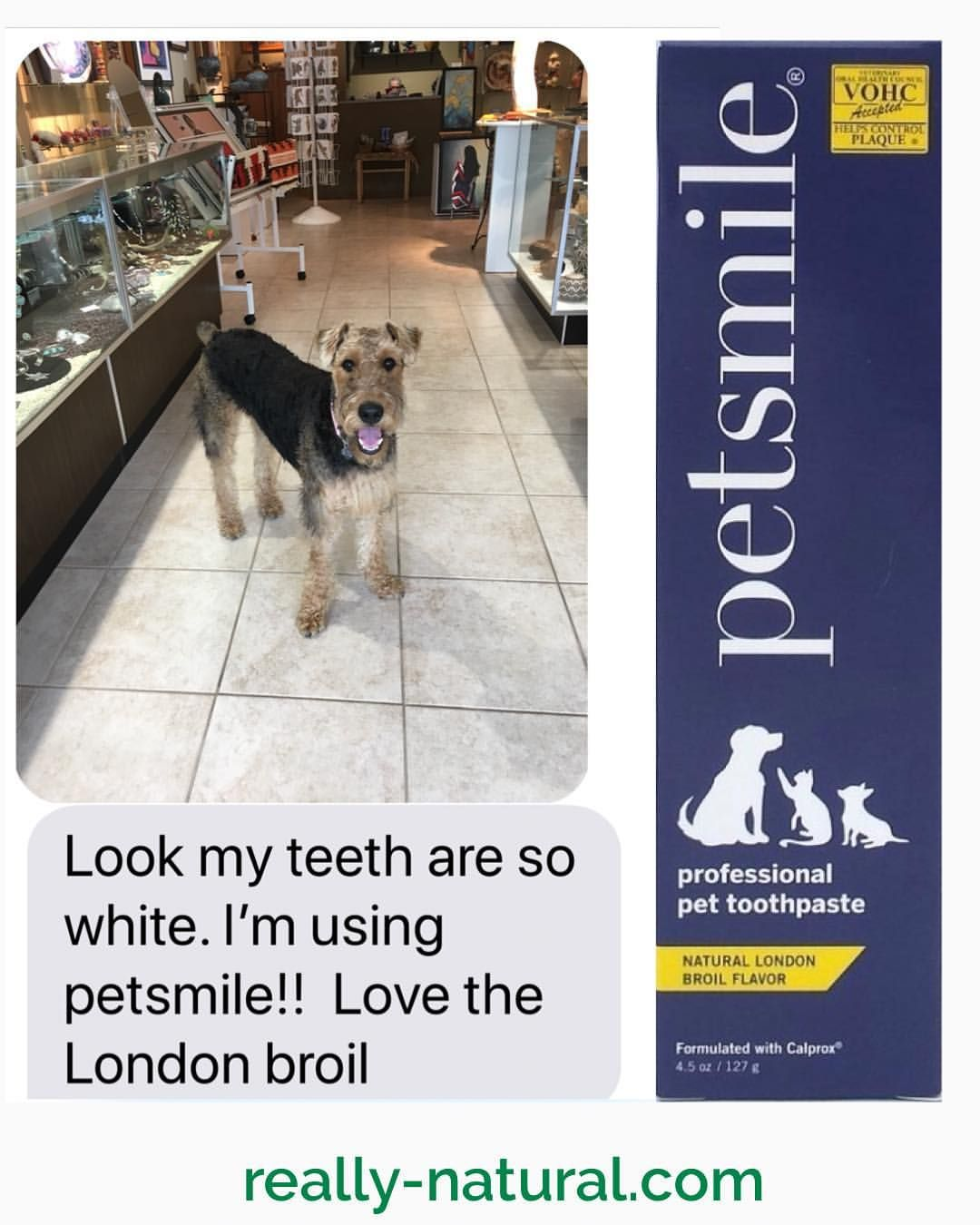 A Taste Loved By Pets With A Fast Easy No Toothbrush Formula Loved By Dog Cat Owners Plus It Whitens Teeth With Natural Pet Dog Dental Dog Toothpaste