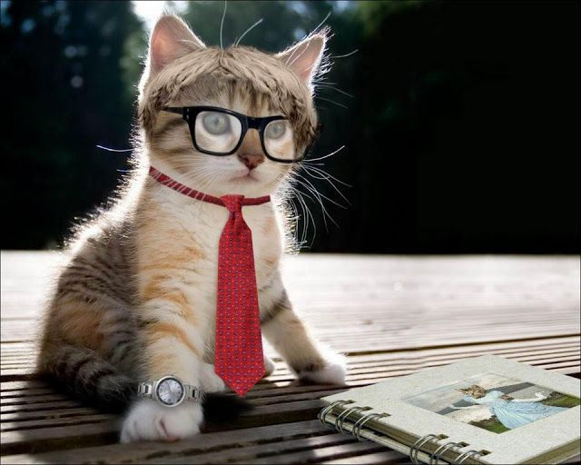 Cute Animal Picture Egytoo Pinterest Cat And Animal