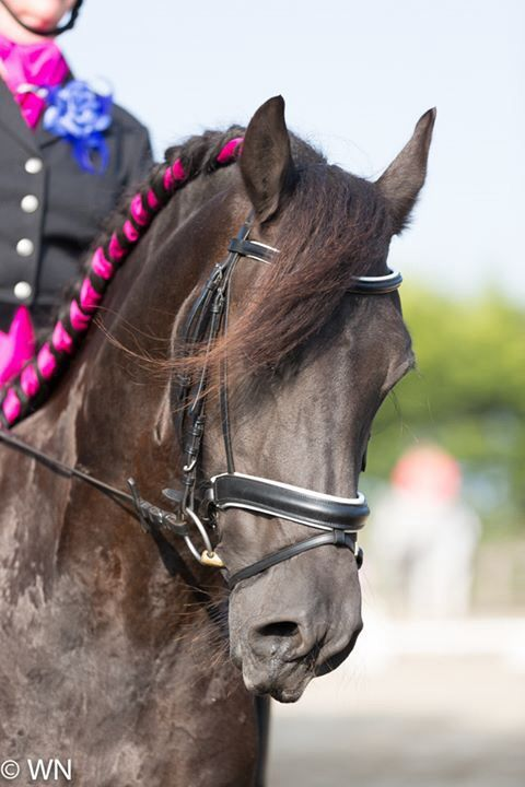 Most #beautiful #horse ever....