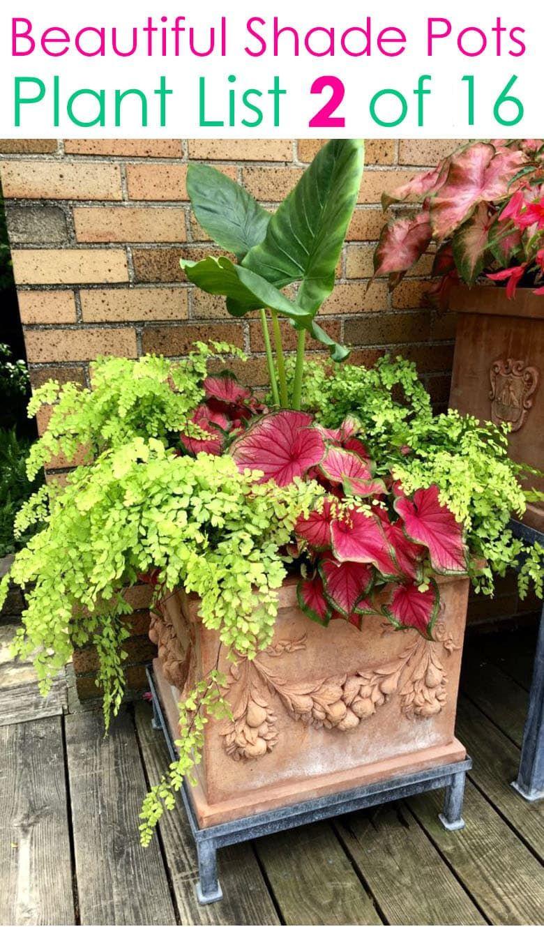 Pin On Flower Pots