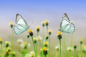Sennik On Line Najlepszy Zbior Snow W Internecie Net Sennik Pl Beautiful Nature Beautiful Flowers Hd Flowers