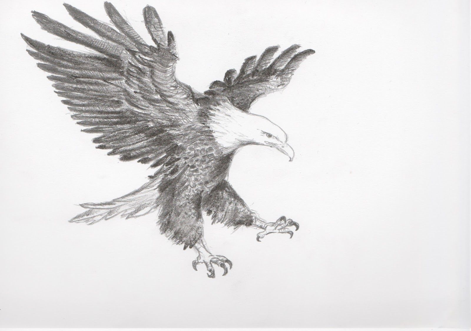 My life and around me flying eagle eagle sketch eagle drawing pencil sketch