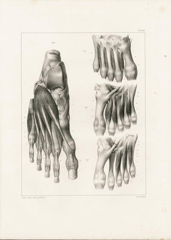 1831 Foot Anatomy, Foot Muscles nerves illustration, Muscles Veins Arteries Print, Human Body Poster 3f40d346454237d0b67fe96b0aacd26c
