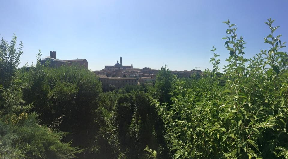 The view of the town of Siena