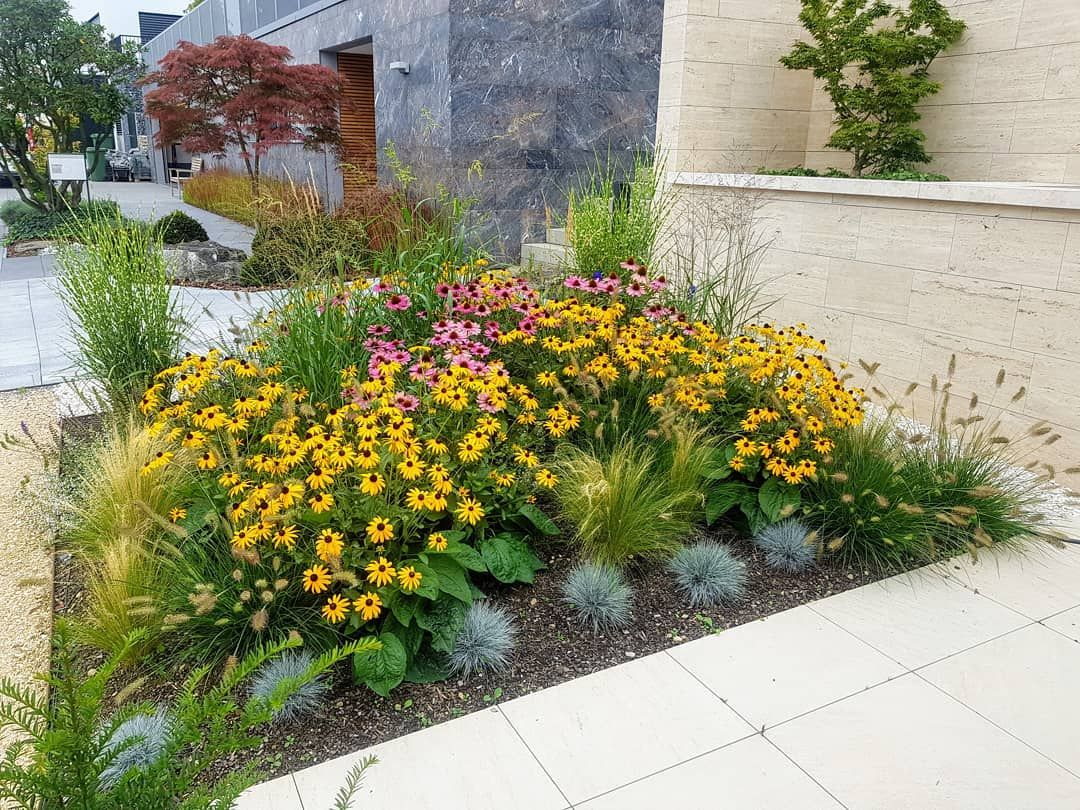 neubepflanzung gräser staudenbeet sonnenhut