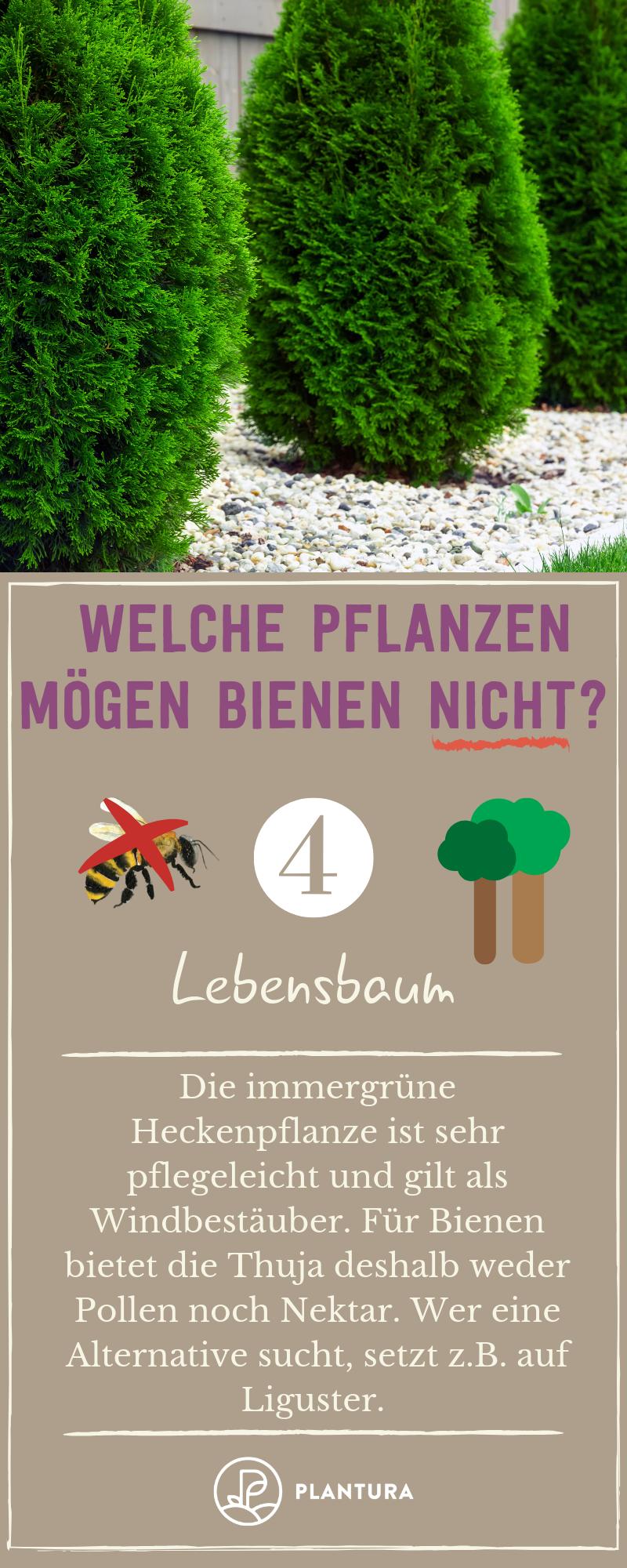 Welche Pflanzen mögen Bienen nicht? - Plantura | Pflanzen ...