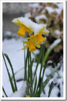 spring snow.....just one please and then on to SPRING!?!