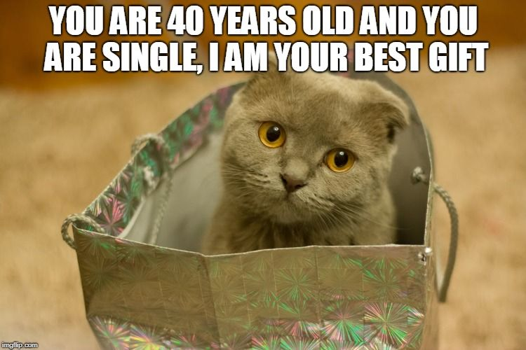 Funny Memes For Lovers : Catsmemes #catsgifmemes funny animal pictures cat memes #cats