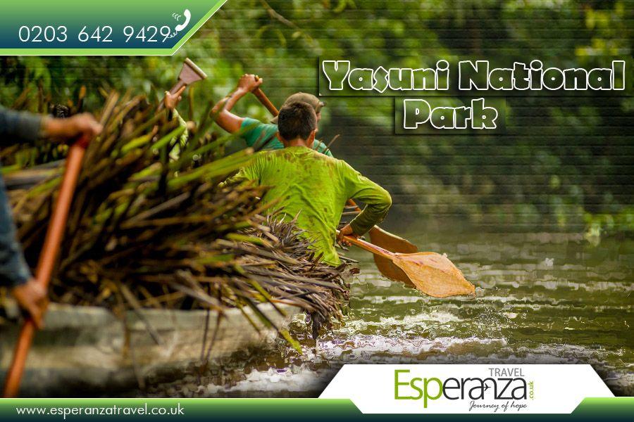 Yasuni National Park , Ecuador  |  Yasuni National Park is in #Ecuador with an area of 9,820 km2 between the #Napo and #Curaray rivers in Napo and Pastaza provinces in Amazonian Ecuador.   |  Source : https://en.wikipedia.org/wiki/Yasuni_National_Park  |  #FlightstoEcuador : http://www.esperanzatravel.co.uk/  |  #YasuniNationalPark #NationalParks #Parks #NationalParksinEcuador #PrimarilyRainForest #Travel #SouthAmerica #CheapFlights #Esperanza #EsperanzaTravel #FlightstoSouthAmerica