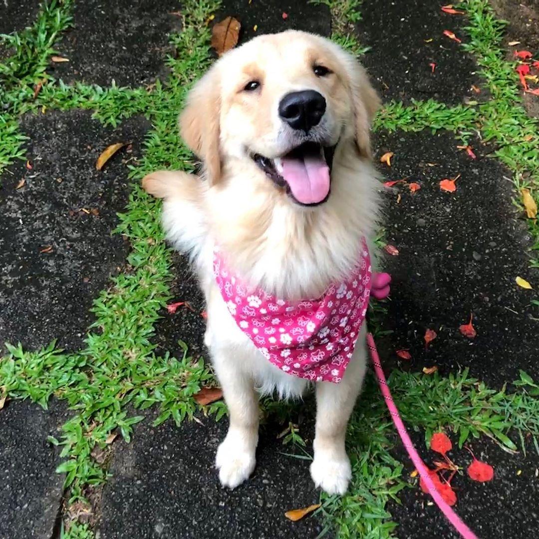 30 Best Dog Names For Gorgeous Golden Retrievers Pictures In 2020 With Images Dog Names Best Dog Names