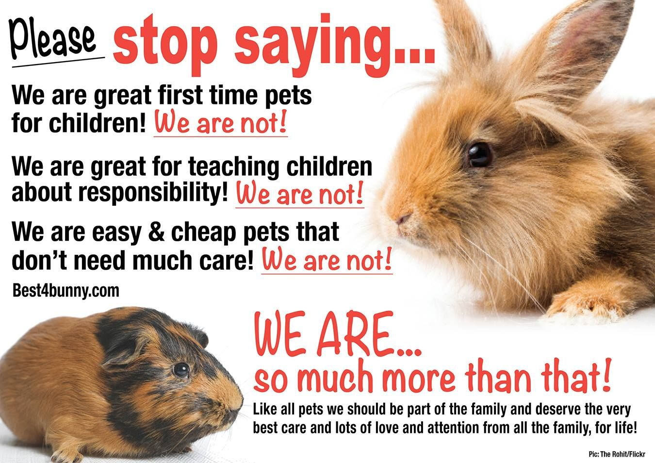 Rabbit Care Advice Best 4 Bunny Rabbit Rabbit Care Cheap Pets