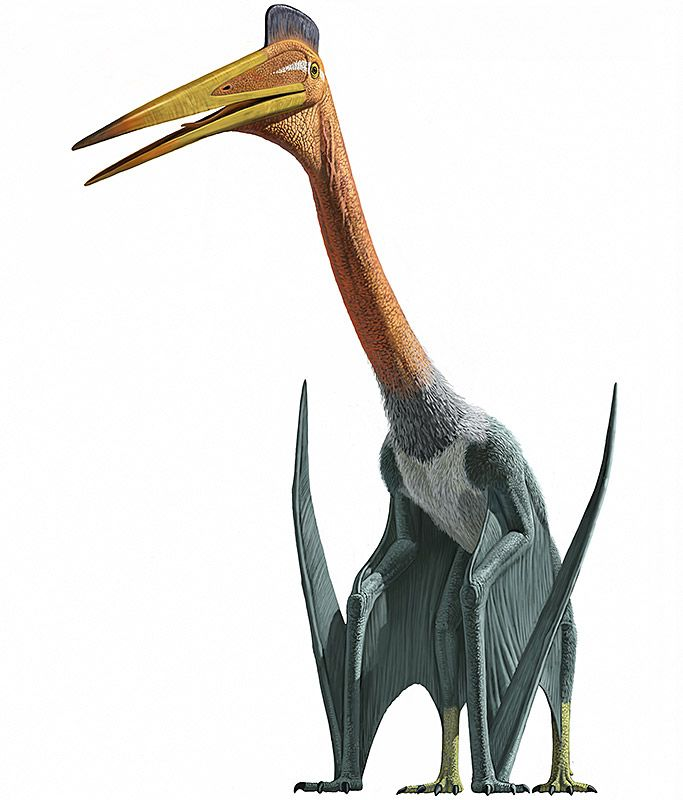 This large pterosaur species quetzalcoatlus northropi lived around 70 million years ago on a