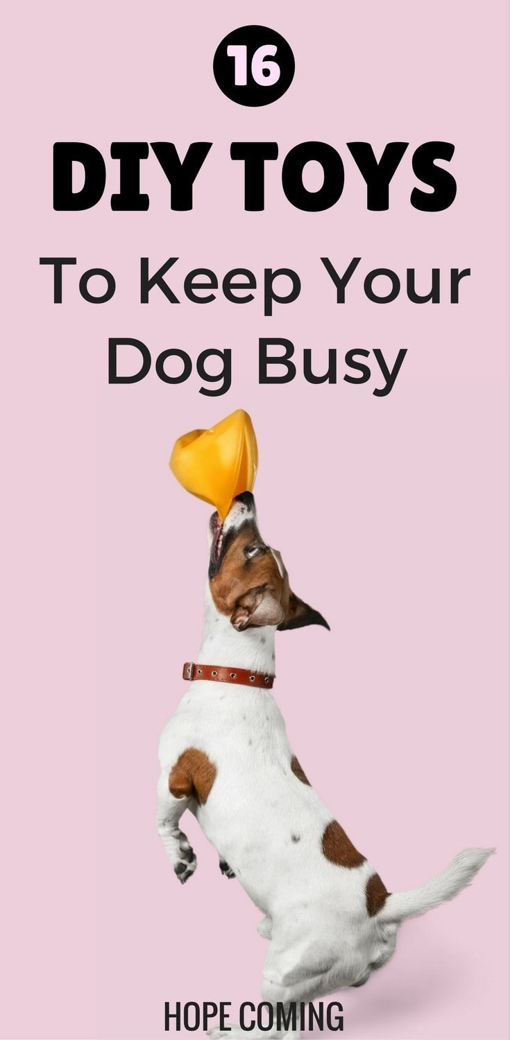 16 Simple DIY Dog Toys to keep them Busy – Hope Coming #DogToys ... | Dog Toys To Keep Them Busy