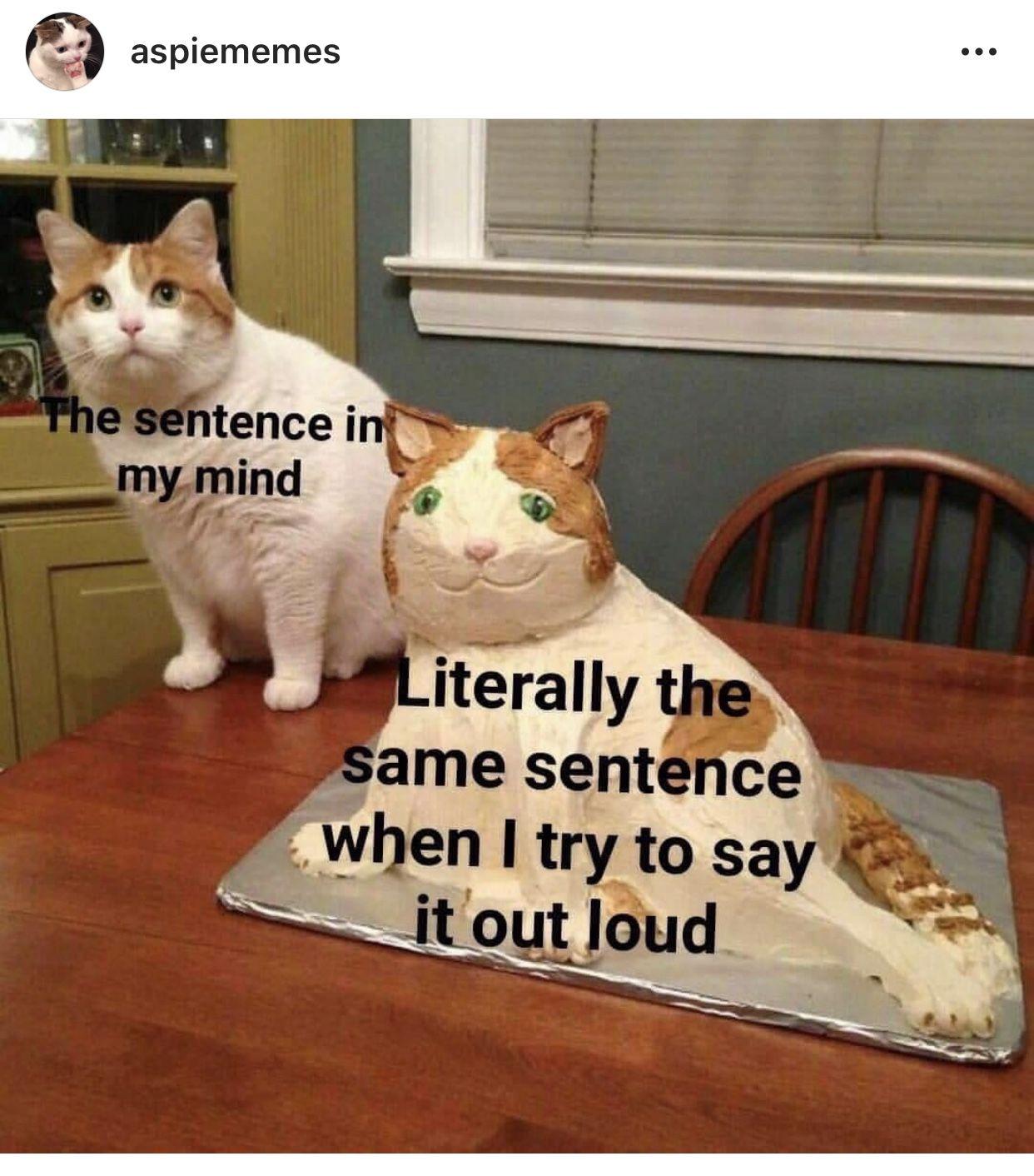 Pin De Alejandra Aceves En Cats Memes Divertidos Meme Gato Memes Gracioso