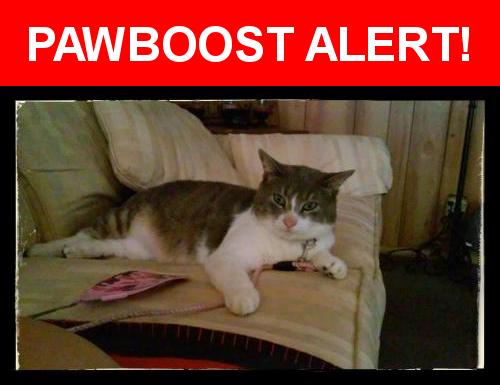 Smokey Was Last Seen In Ormond Beach Fl 32174 Nearest Address Near New Britian Ave N Washington St