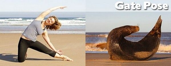 Yoga Positions Demonstrated By Funny Animals (Photo Gallery) - Karma Jello