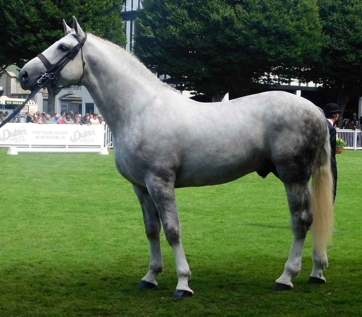 Irish Draught Wikipedia Irish Sport Horse Draft Horse Breeds Horse Breeds [ 1050 x 1200 Pixel ]