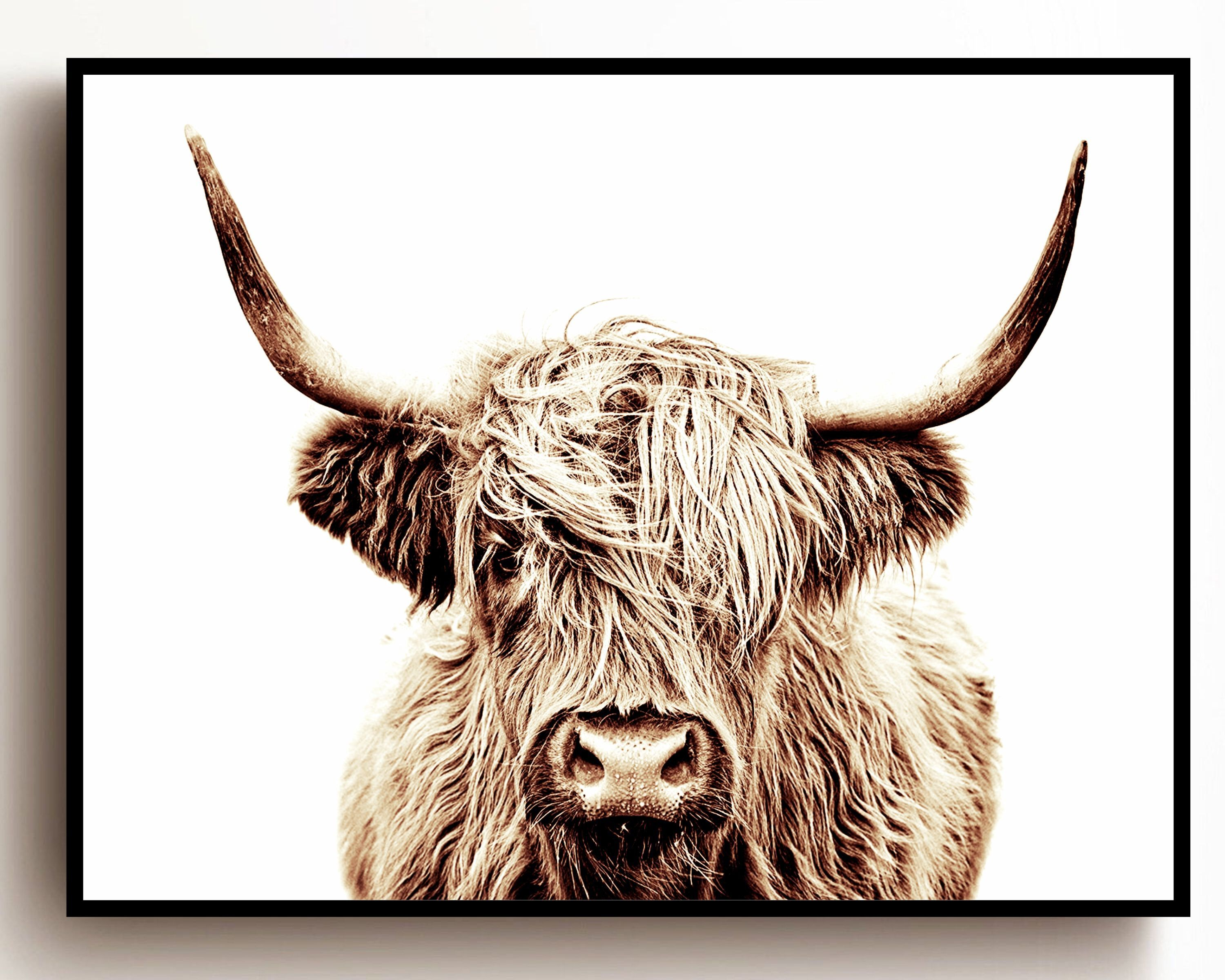Highland Cow Print Buffalo Print Bull Print Cow Canvas Etsy In 2021 Cow Wall Art Highland Cow Print Cow Canvas