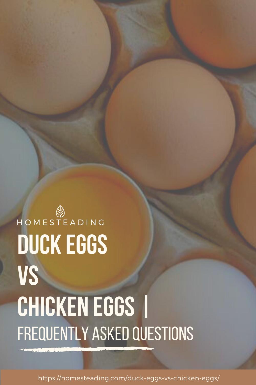 Duck Eggs Vs Chicken Eggs Which Eggs Are Better Duck Eggs Chicken Eggs Eggs