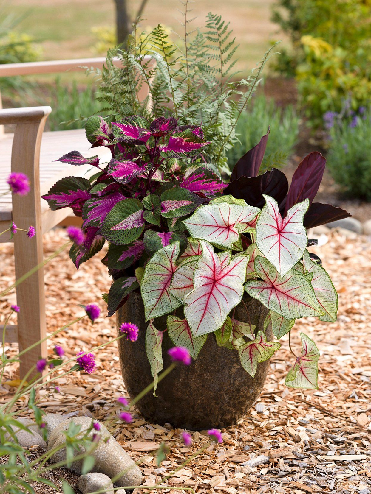 How To Dry Annual Flowers In 2020 Flower Pots Outdoor Container Flowers Flower Pots