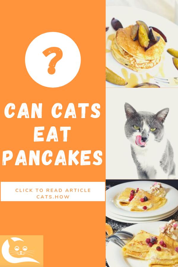 Can Cats Eat Pancakes Eat, Cat diet, Cat nutrition