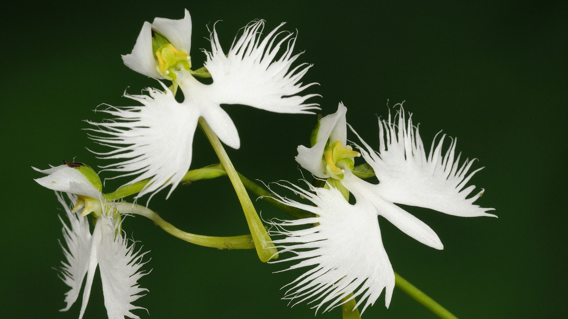 Rare White Flowers That Look Like Birds Great Gatsby Engagement