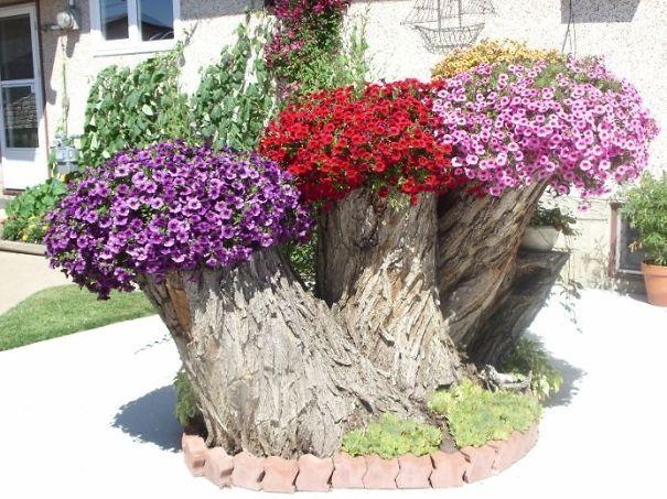 troncos de árboles convertidos en maceteros | fuente de flores