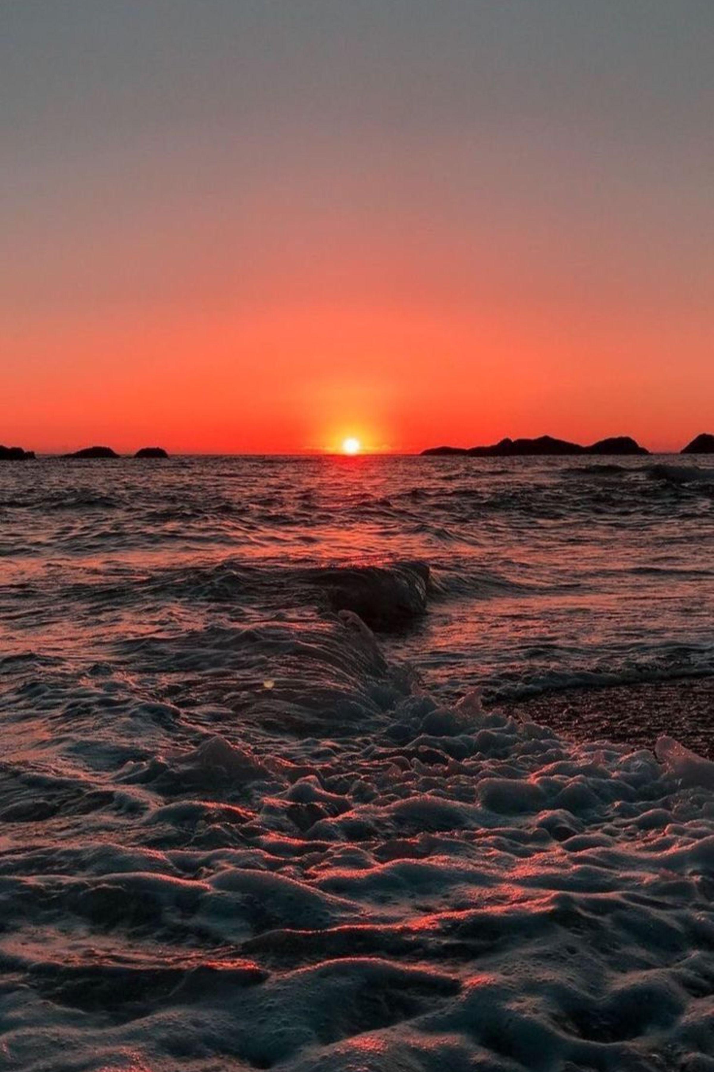 ENJOY THE PALM LIFE Sunset wallpaper