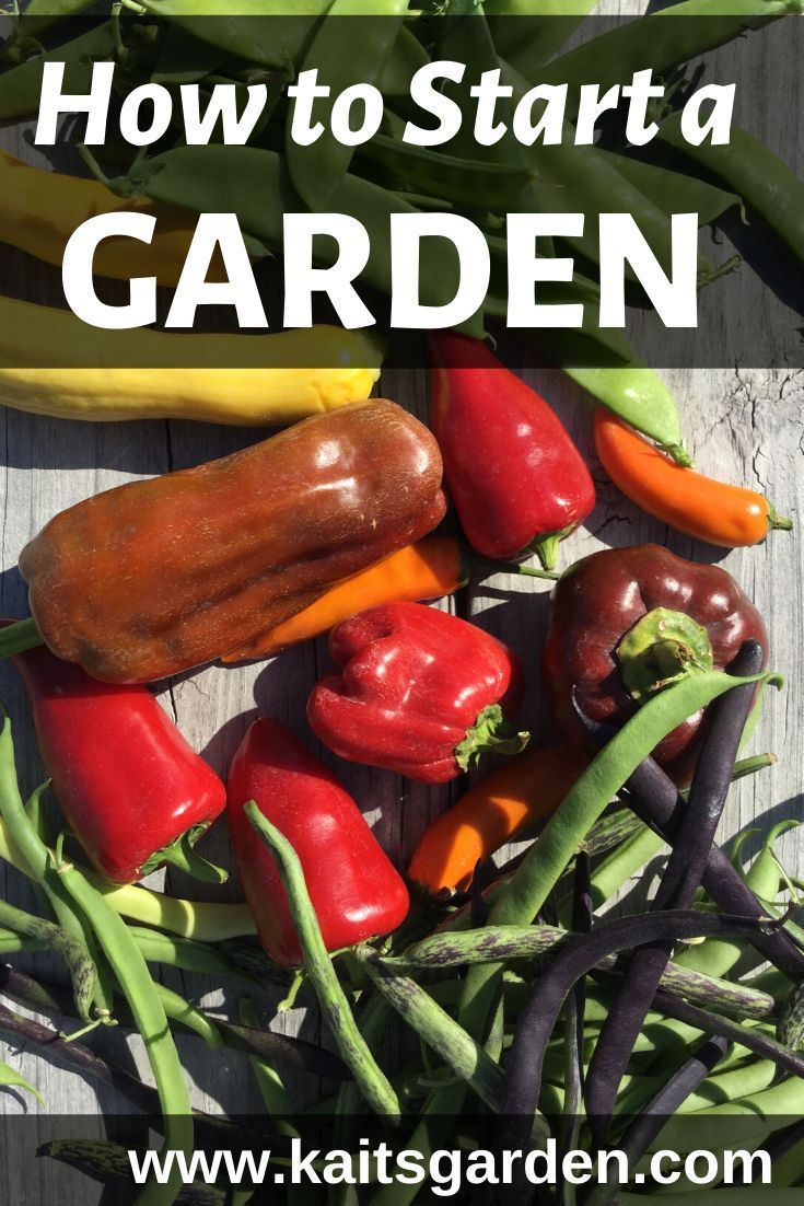 Gardening for Beginners 8 Easy Vegetables is part of Gardening for beginners, Starting a garden, Growing vegetables at home, Planting vegetables, Vegetables, Garden help - Are you thinking of starting your first garden  You'll find a variety of tips to get you started in Gardening For Beginners 8 Easy Vegetables!