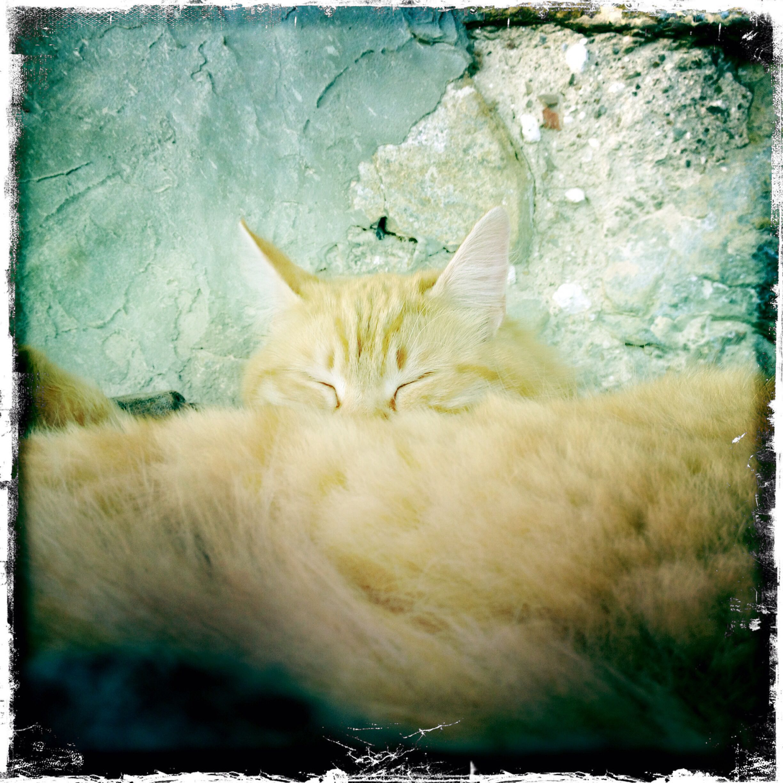 My cat Duma