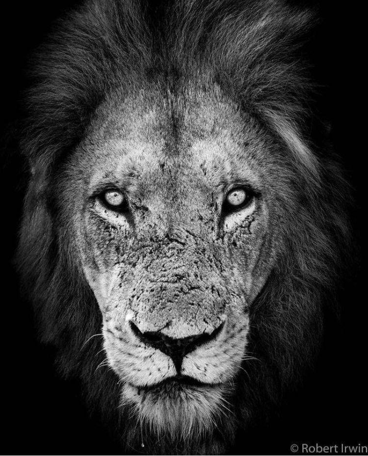 Robert Irwin Photography Steve Irwin S Son Animal Photography Wildlife Photography Animals