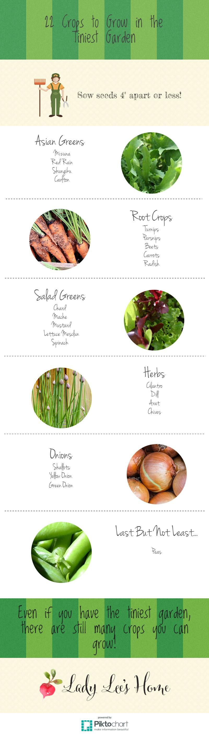 22 Crops to Grow in the Tiniest Garden | Small gardens, Small spaces ...