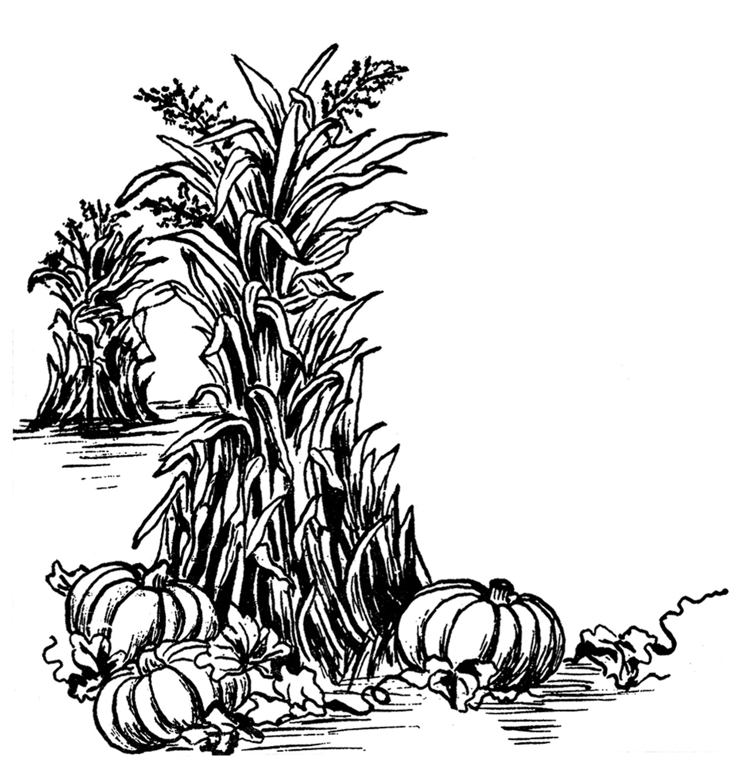 Fall Harvest Clip Art Graphics Fall Clip Art Fall Images Fall