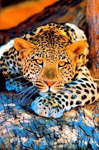 Google Binatang Cantik Kucing Besar Kucing Dan Anak Kucing