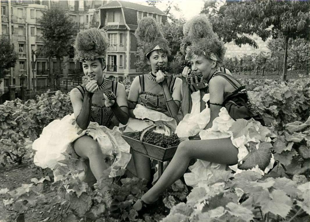 Les danseuses du Moulin Rouge font les vendanges de la vigne de Montmartre 1958