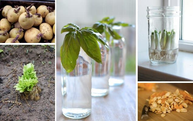 How to Regrow Vegetables from Scraps