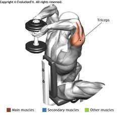 Hacer triceps con pesas