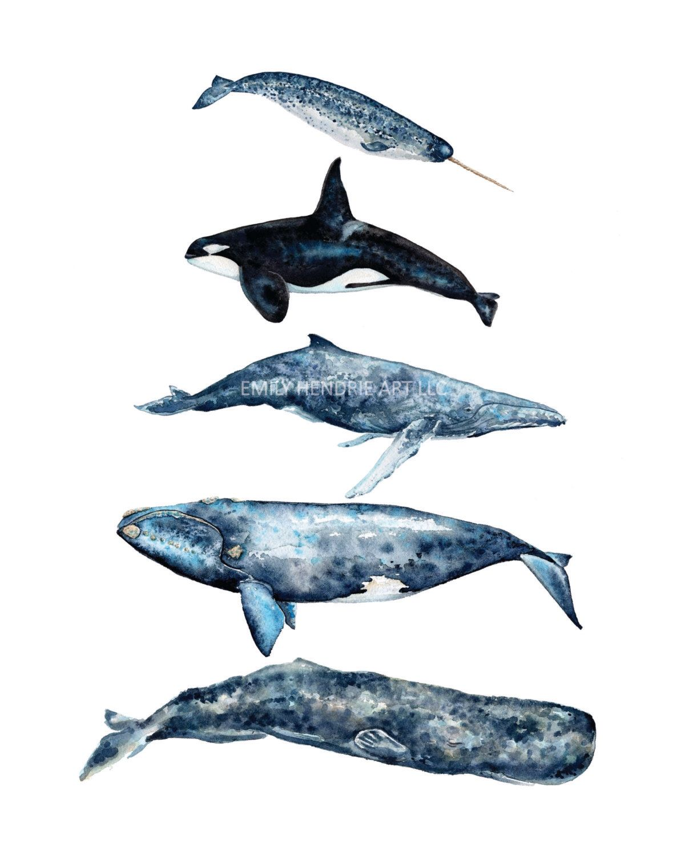 Sperm whale list #1
