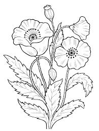Vorlagen Mohnblumen Google Suche Blumenzeichnungen Ausmalen Malvorlagen