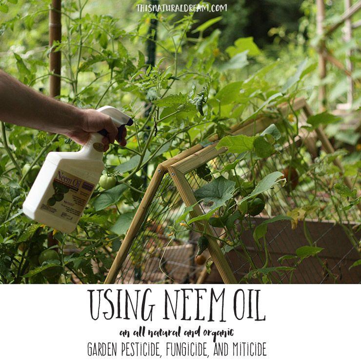 Using Neem Oil To Battle Garden Pests
